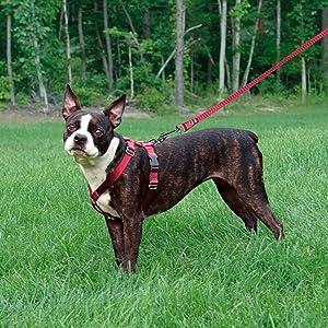 easy walk harness, dog harness, petsafe dog harness, dog walking harness, medium dog harness, large
