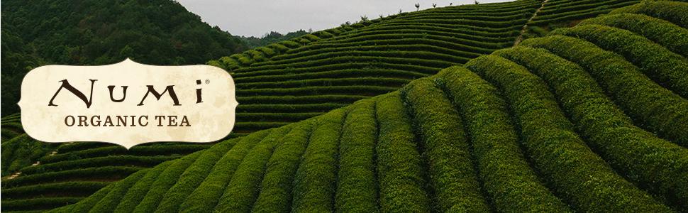 numi organic green tea loose leaf white oolong jasmine pearls gunpowder orange spice ti kuan yin