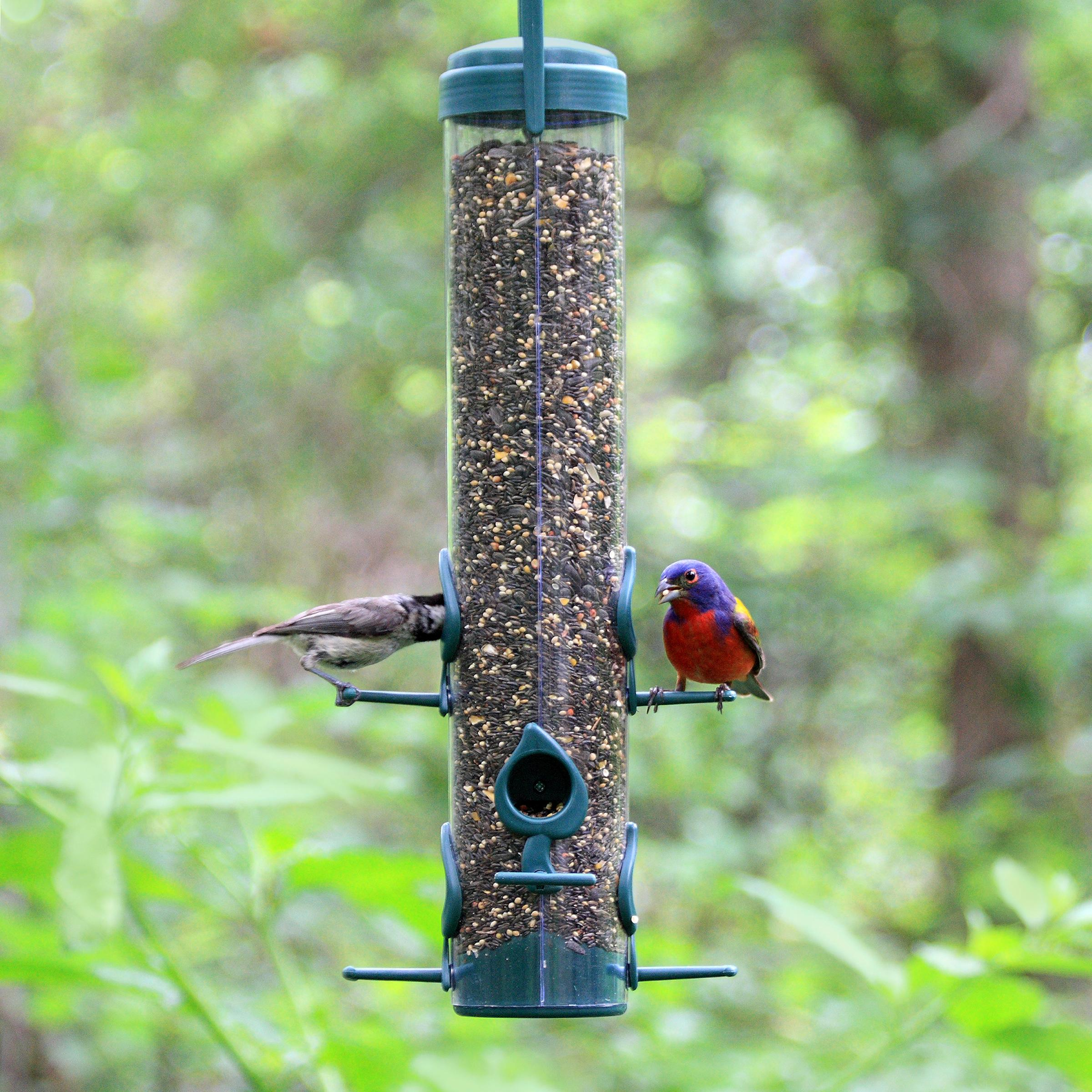 install feeders learn keep bird direct from how to feeder squirrel proof away squirrels it