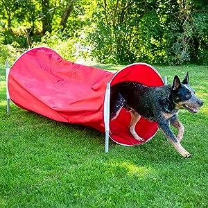 dog tunnel toy