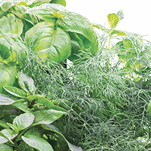 AeroGarden, Seed Pod Kit, Gourmet Herb