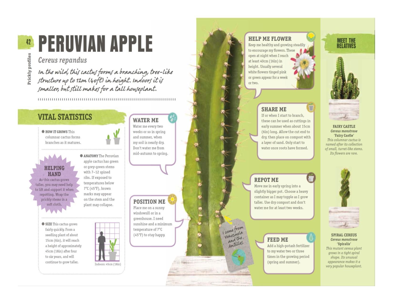 Happy Cactus: Cacti, Succulents, and More: DK: 9781465474537: Amazon ...