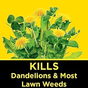 lawn weeds control, lawn food, lawn fertilizer, crabgrass, dandelion, weeds