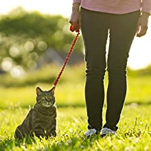 cat harness tips acclimating getting used to training