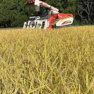 稲刈り収穫