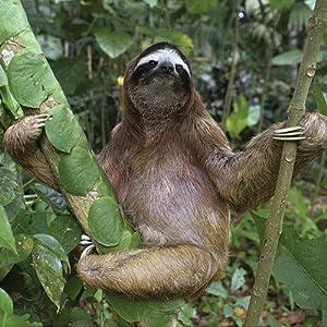 animals wildlife nature fauna domesticated domestic llama sloth tiger shark goat cow donkey panda