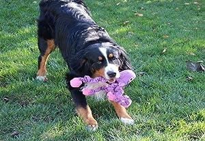 low-cost Smart Pet Love - Tender-Tuffs - Tug -Tough Dog Toy - Play Tug-of-war - Proprietary TearBlok Technology
