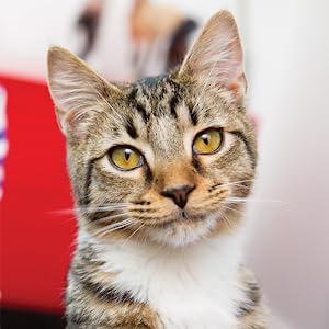 cat litter box litterbox automatic self cleaning crystal petsafe pet scoopfree scoop