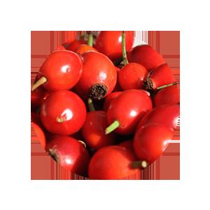 rose hip seed oil
