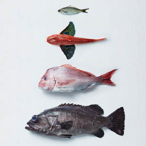 Photo of 4 fish lain out in order of height