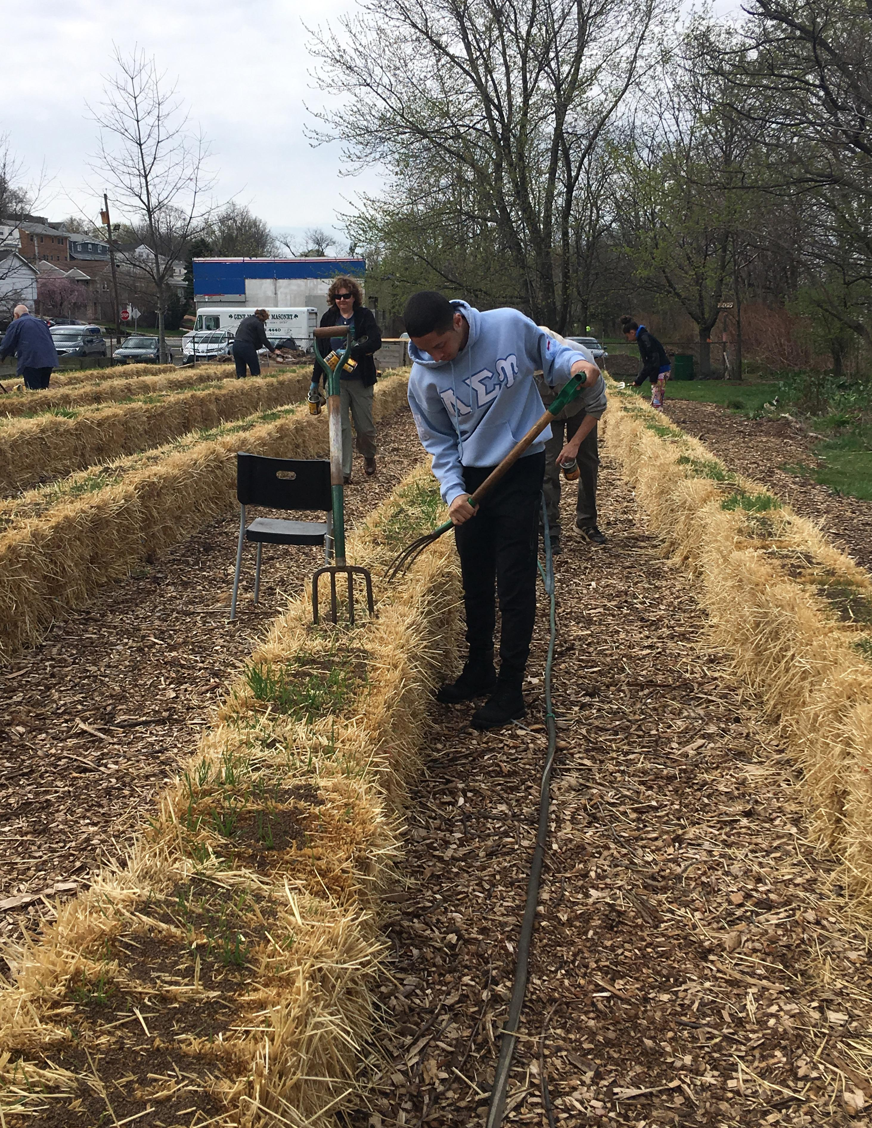 Straw Bale Solutions: Creative Tips for Growing Vegetables in Bales ...