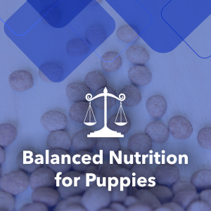 The complete & balanced nutrition for growing puppies with proper ratio of protein and fat