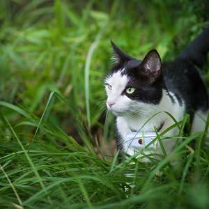gps gatto