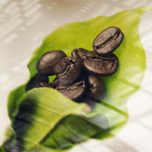 Singular Sensational image featuring the 9 different coffee beans that make up the illy blend.