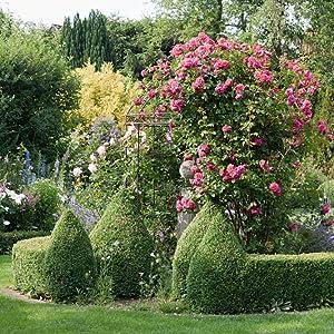 Garten; Rosen
