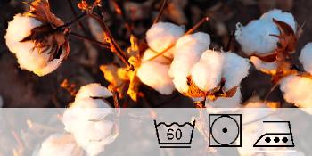 reine Baumwolle