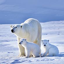 北極スマイル・南極スマイル カレンダー 2020 8月