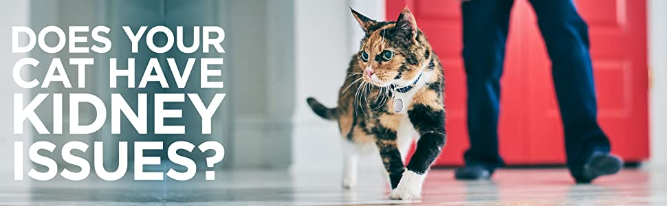 Does your cat have kidney issues