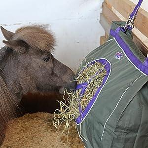 Mini horse enjoys green hay bag