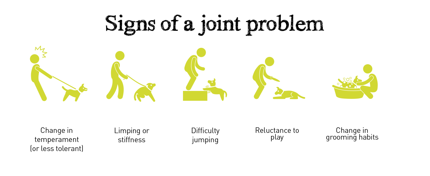 Signs of a dog joint problem