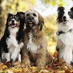 Hund, Kommunikation, Lernen, Hundereziehung