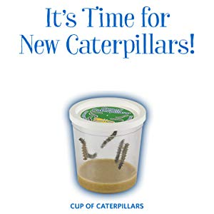 It's time for new caterpillars!