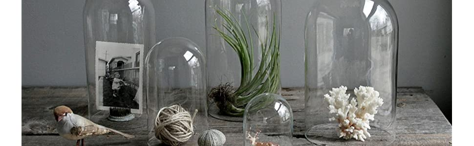 Glass dome, Glass cloche, Glass, bell jar, Glass terrariums, terrariums, Glass display, display case