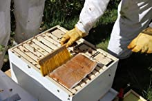 12x10 Strips Amipal Acaricidal Treatment Adult Forms Varroa Bees Apiary