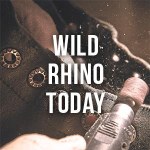 wild rhino today