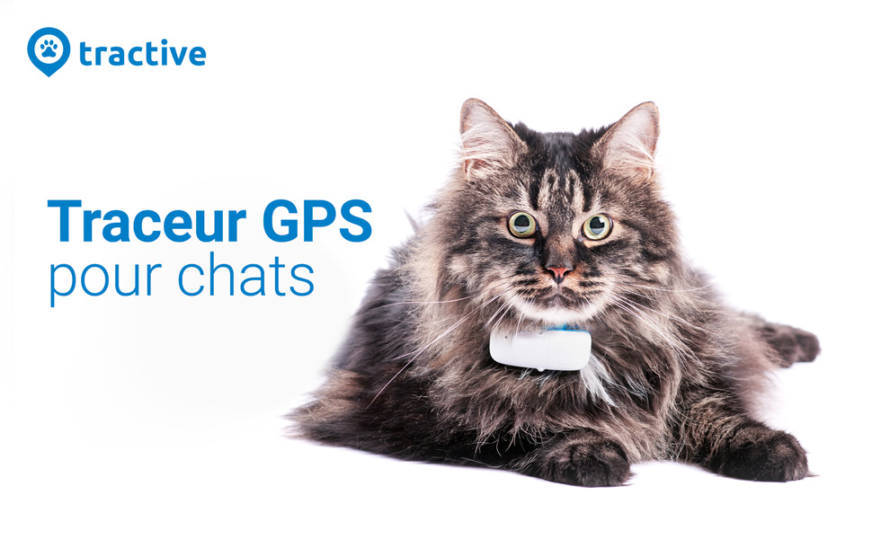 collier gps chat traceur ikati