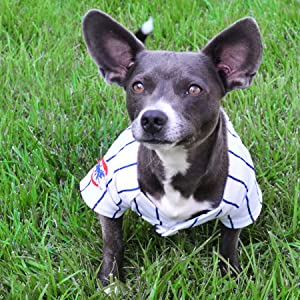 meet c598c 76bf0 NBA PET Apparel. - Licensed Jerseys for Dogs & Cats Available in 25  Basketball Teams & 5 Sizes Cute pet Clothing for All Sports Fans. Best NBA  Dog ...