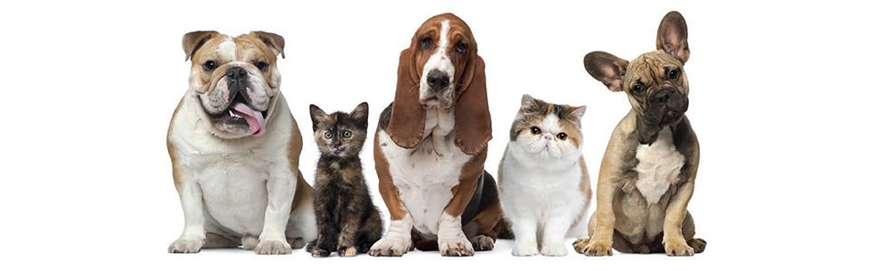 puppies dogs cats kitties kat cat kitty dog puppy