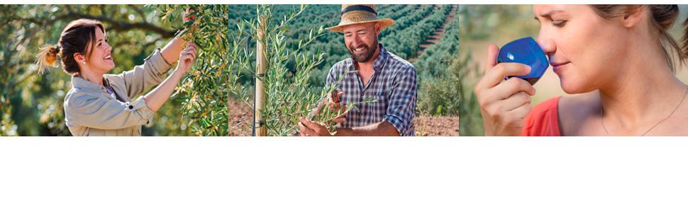 Pompeian Olive Oils