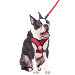Amazon.com : Gooby 04111-FPNK-S Choke Free X-Harness for Small Dogs
