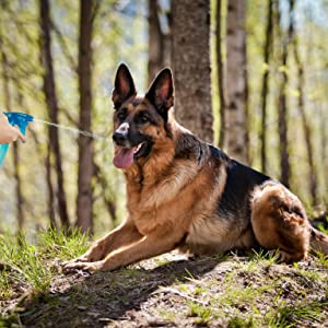 Dog Training spray bottle