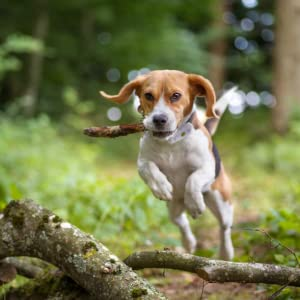 gps per cani