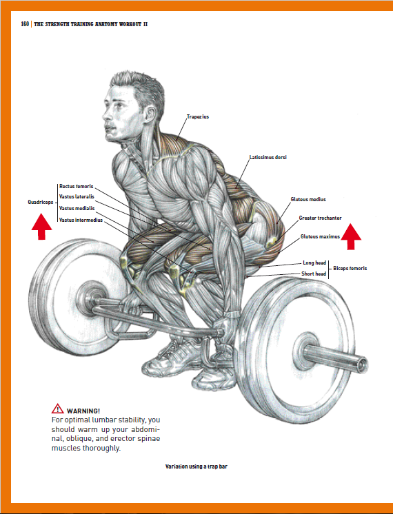 Strength Training Anatomy 3rd Edition is a magical book, one I have not  seen Human Kinetics replicate in any of their attempts. It's like that  amazing movie ...