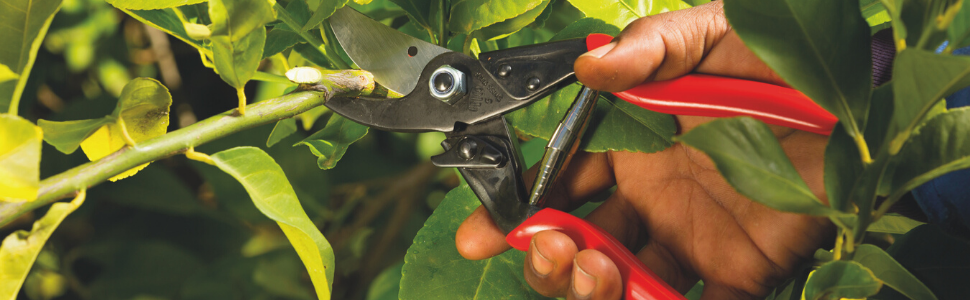 pruning garden rose small fiskers yard gardening sheers plant bush flower clippers pruner snippers