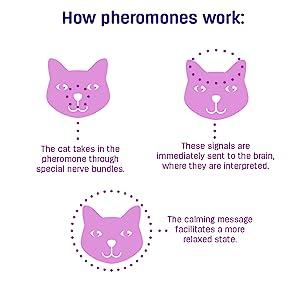 stress in cats, cat behavior problems, feliway for cats, cat pheromones