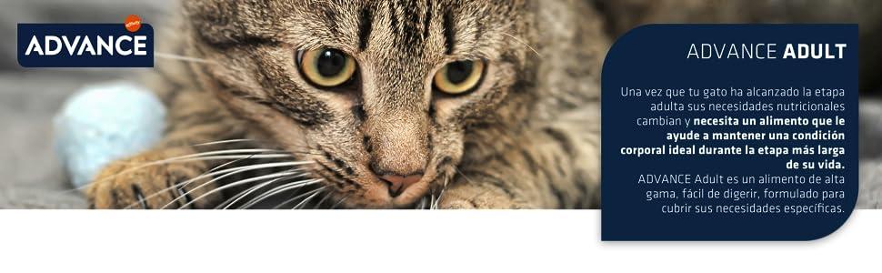 Advance Pienso para Gato Adulto con Pollo y Arroz - 15000 gr