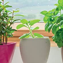 Indoor Edible plants
