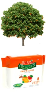 Jobe's Organic Fruit Citrus Tree Fertilizer Spikes Inground