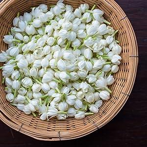 full leaf whole leaf jasmine dragon pearls numi organic tea hand rolled scented chinese tealyra