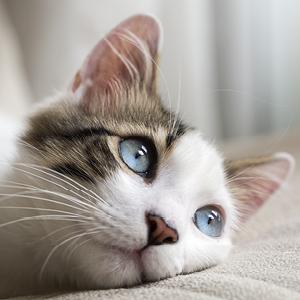 lozione pulizia occhi cane e gatti