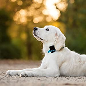 Tractive Gps Pet Tracker Dog