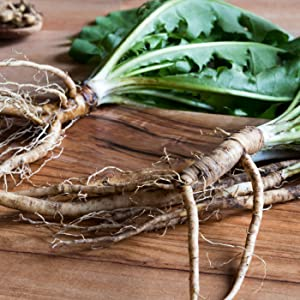 Roasted organic Dandelion Root is a renowned detox herb and weight loss herb with prebiotic inulin