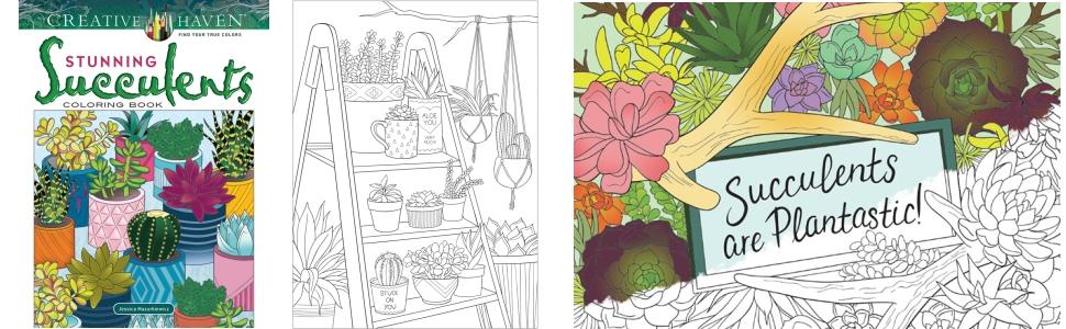 adult coloring cactus