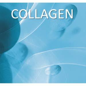 collagen, collagen moisturizer, moisturizer for face, face moisturizer, facial moisturizer, skincare
