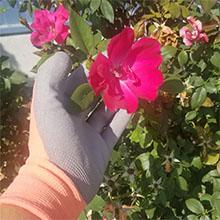 landscaping, garden glove, work glove, tools, gardening