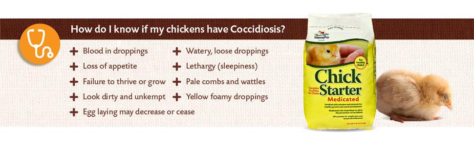 medicated chick starter; chick starter; baby chick starter kit